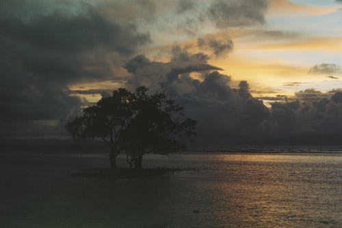 Ảnh lưu trữ miễn phí về biển, cây, fm10, Hoàng hôn