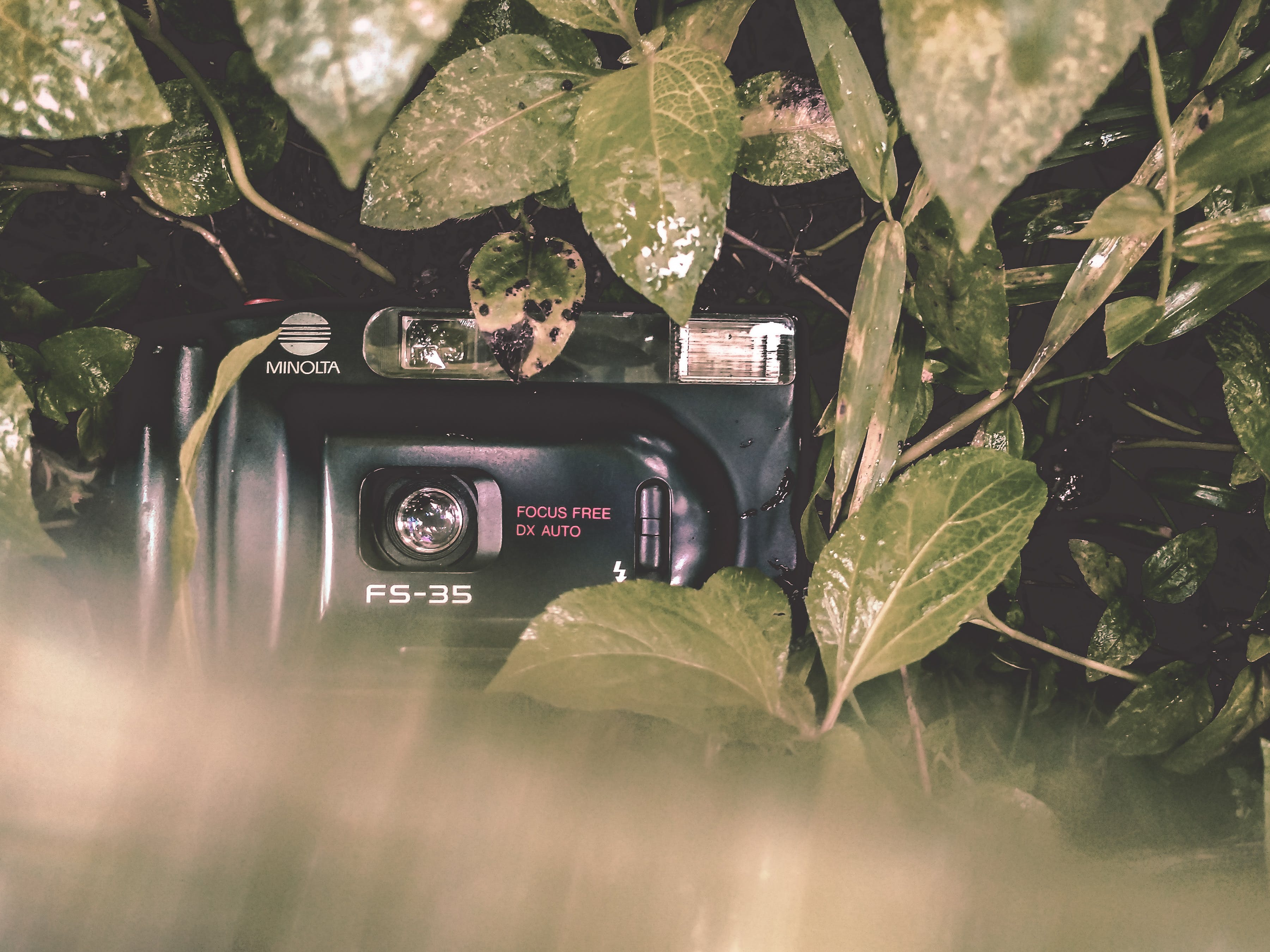 Black Minolta Film Camera Covered With Leaves