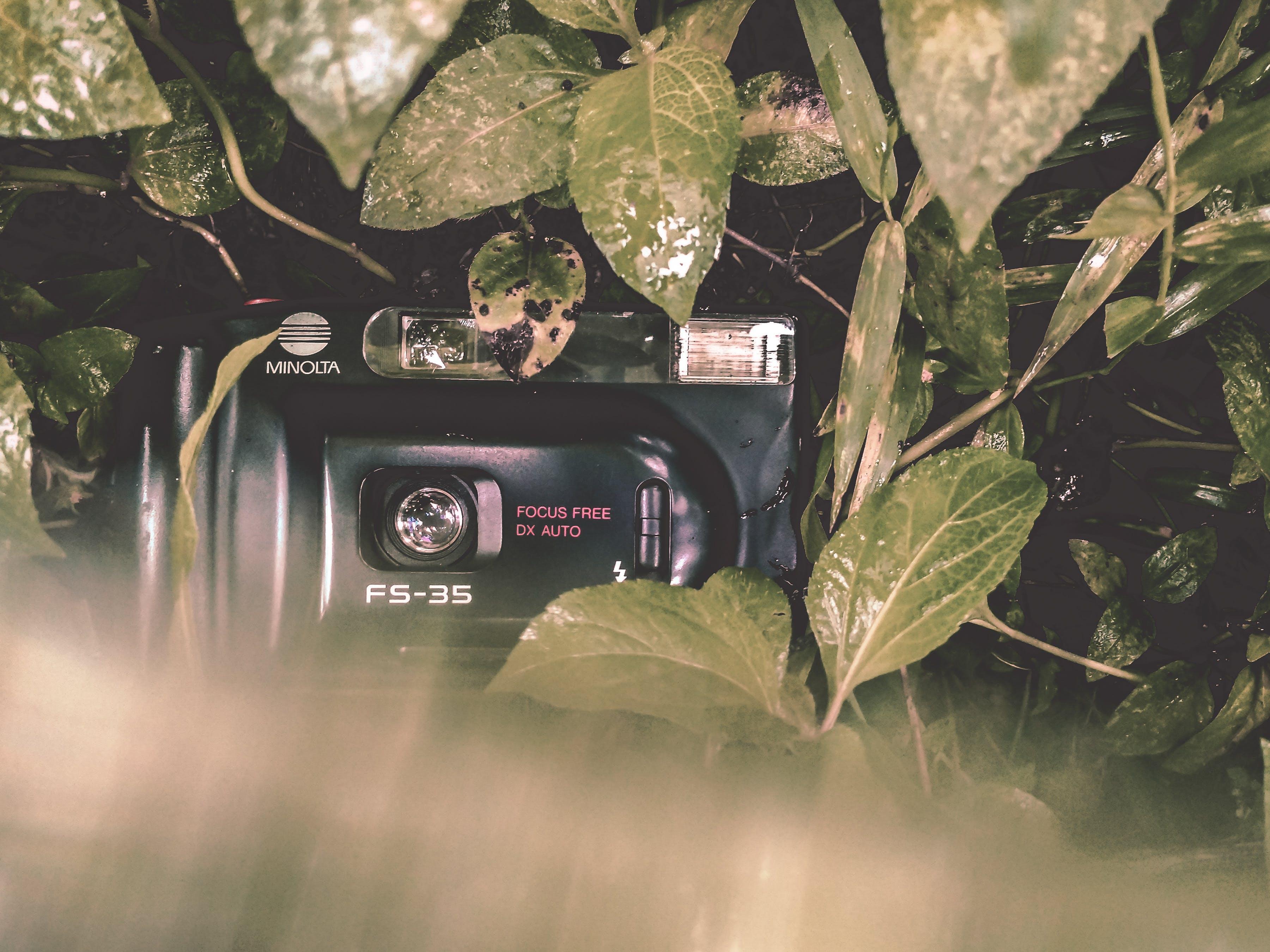 Black Minolta Film Camera Covered With Leaves