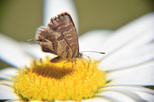 Brown Butterfly on Yellow Petaled Flower Close-up Photo