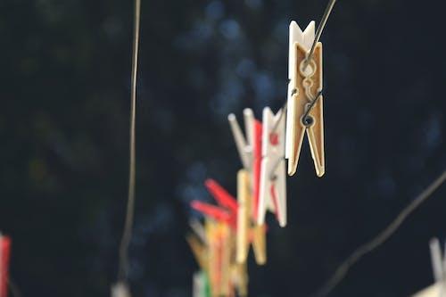 Fotobanka sbezplatnými fotkami na tému drevený, hĺbka ostrosti, les, štipce na bielizeň