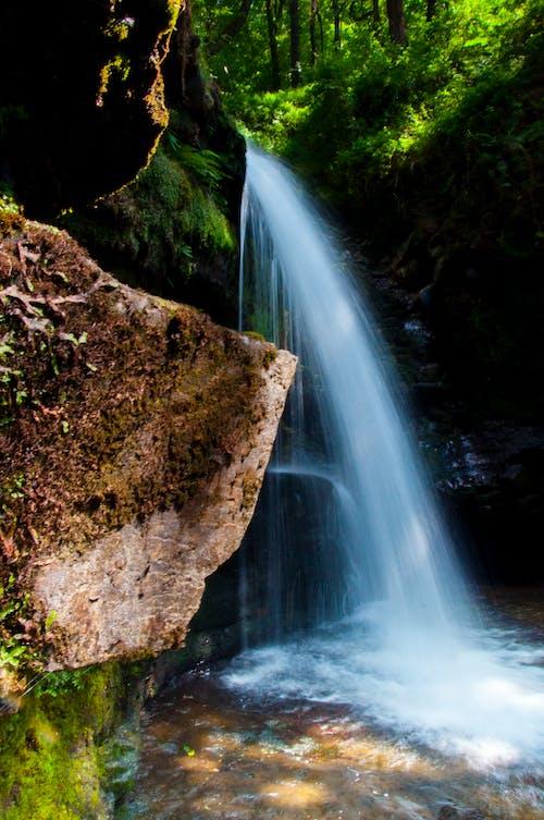 Free stock photo of #forest, #Tree, #woods, aberdulais