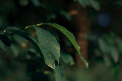 Focus Photography of Green Leaf Plant