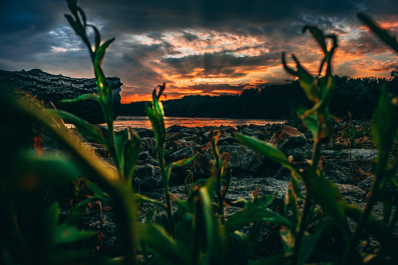 Free stock photo of nature, sky, sunset, night