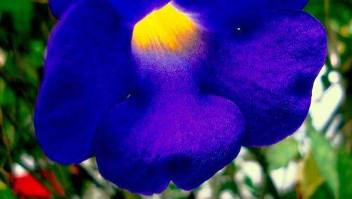 Free stock photo of blue, flower, yellow