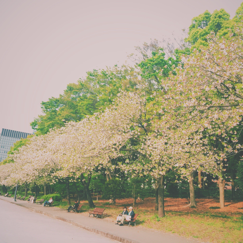 Free stock photo of spring