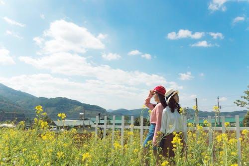 Gratis stockfoto met bloemen, cap, dag, flora