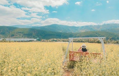Základová fotografie zdarma na téma denní, farma, hory, houpat