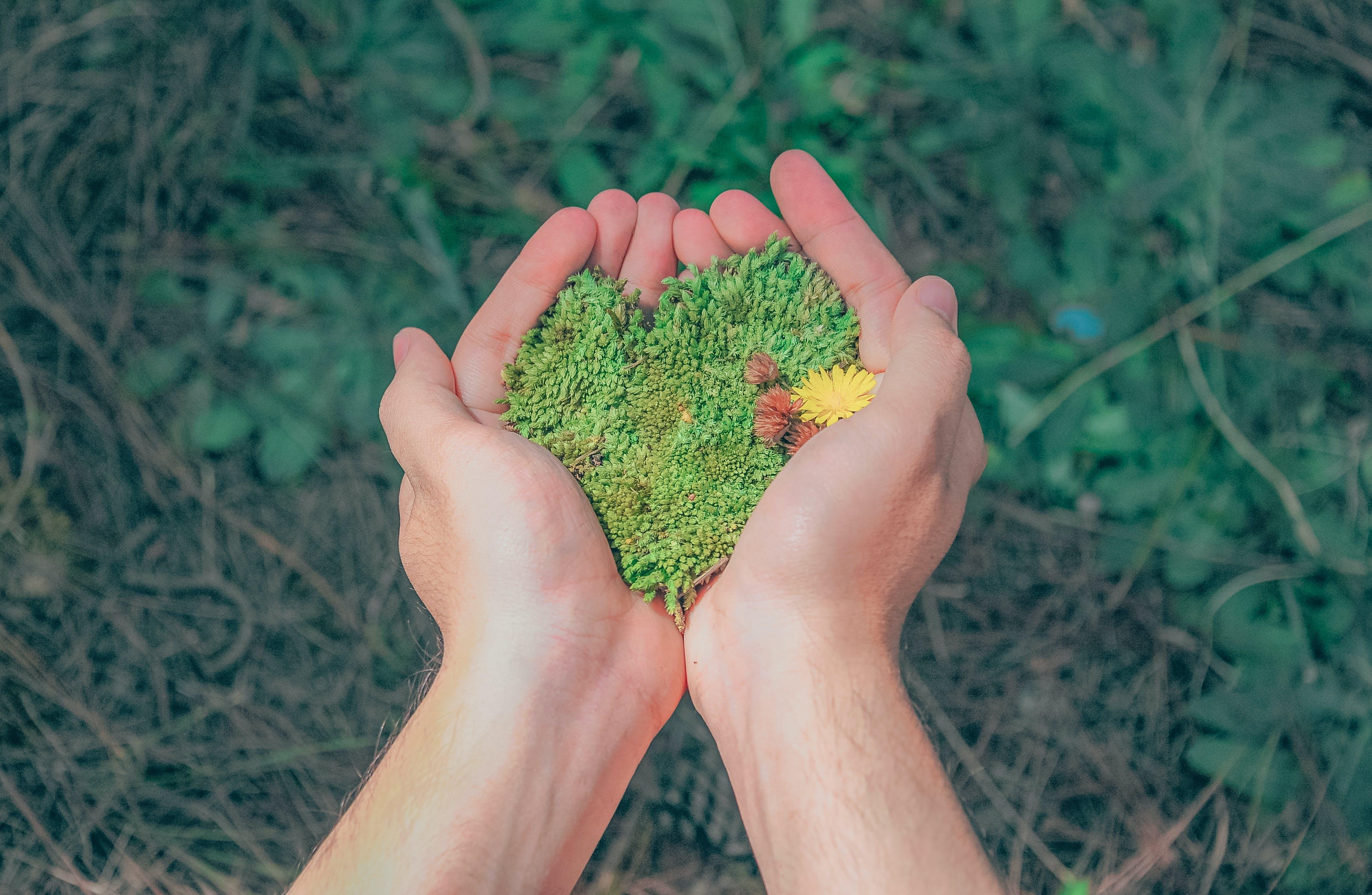 Gratis arkivbilde med dagslys, flora, gress, hender
