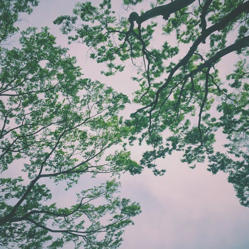 分支機構, 天性, 天空, 樹 的 免费素材照片