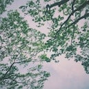 nature, sky, branches