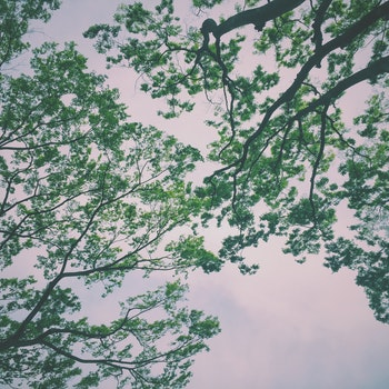Green Trees Under Nimbus Clouds
