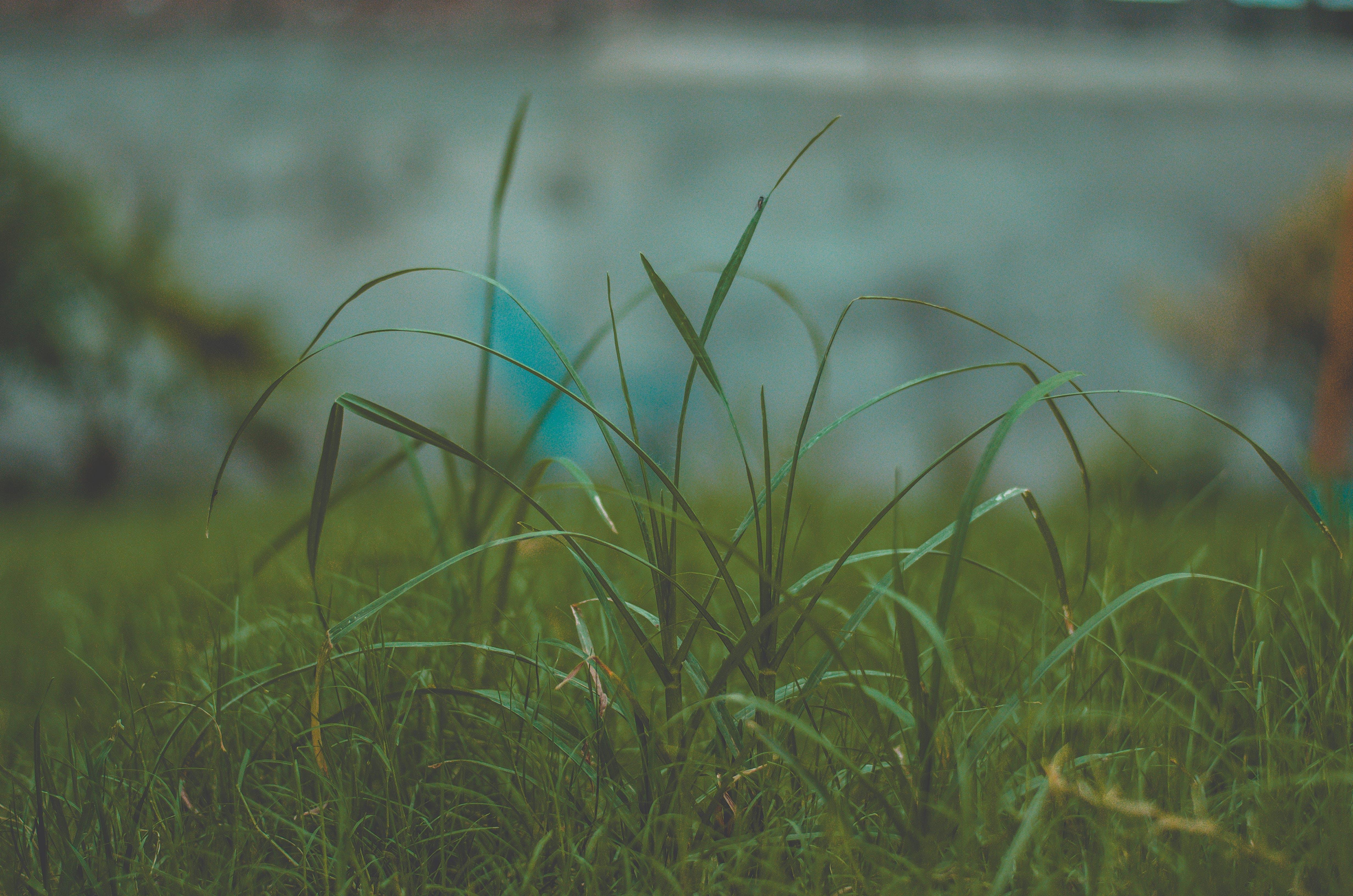Kostenloses Stock Foto zu bäume, dunkles gras, gras, grün