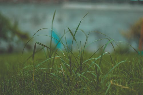 Free stock photo of dark grass, environment, grass, green