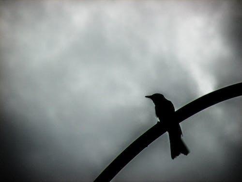Ảnh lưu trữ miễn phí về # chim