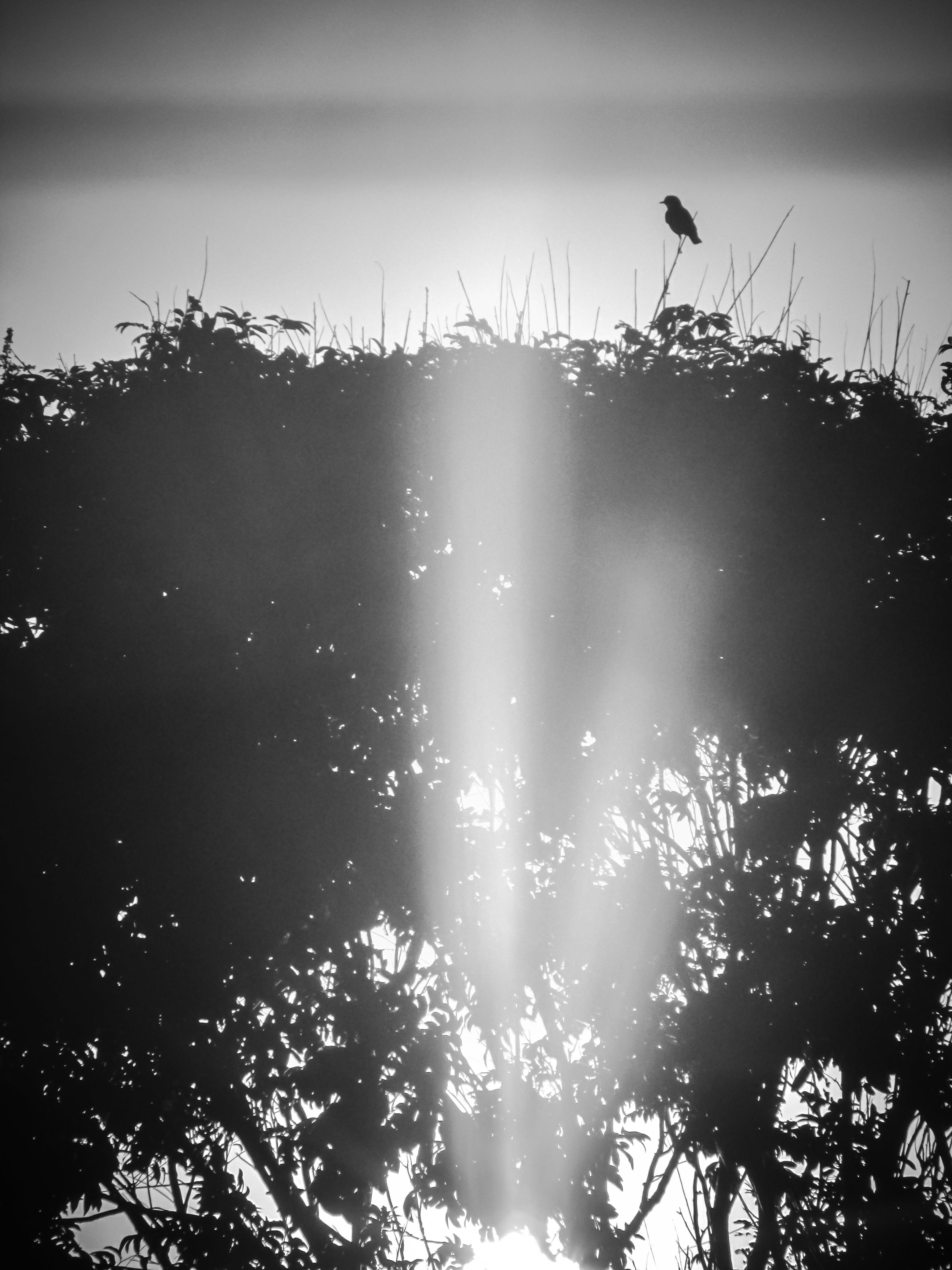 Kostenloses Stock Foto zu sonnenuntergang, schwarz und weiß, #birds