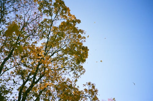 Low Angle Photography of Green Leaf Trees Under White and Blue Sky at Daytime