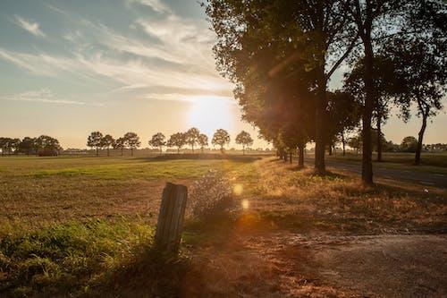 คลังภาพถ่ายฟรี ของ กลางแจ้ง, ชนบท, ดวงอาทิตย์, ต้นไม้