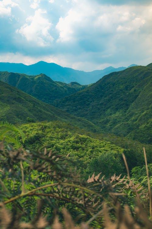 elämä, luonto, maisema