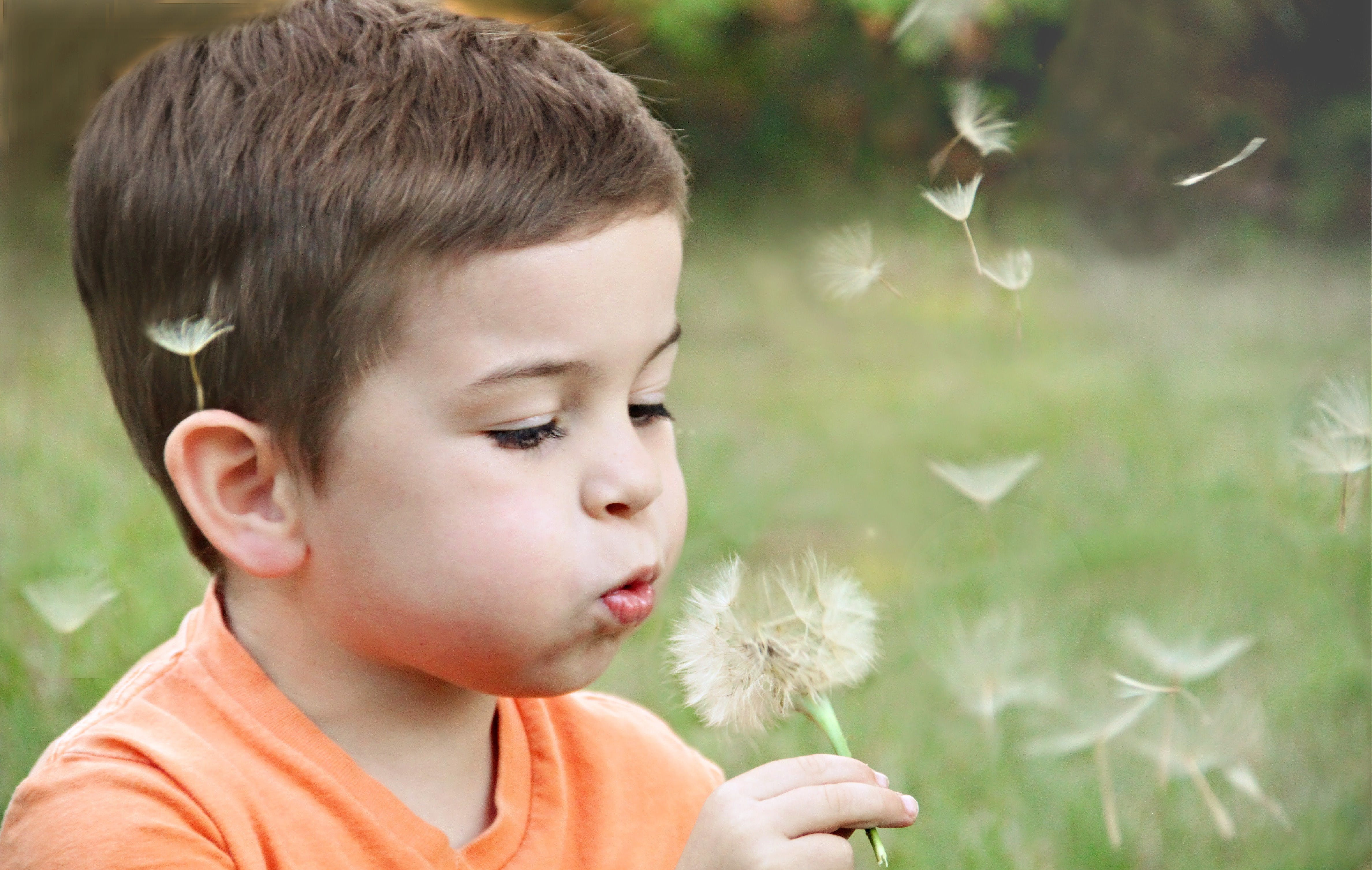 Boy Wearing Orange Shirt Blowing on Dandelion
