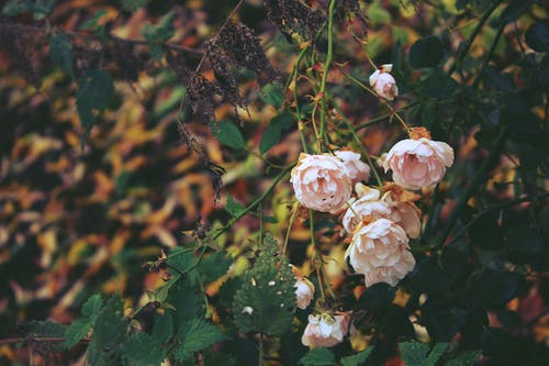 Kostenloses Stock Foto zu blume, gartenpflanze, natur