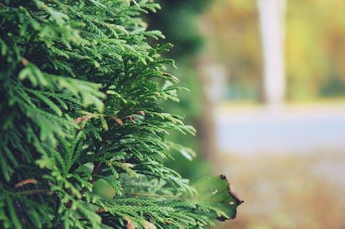 Darmowe zdjęcie z galerii z drzewo, dzień, jasny, kolory