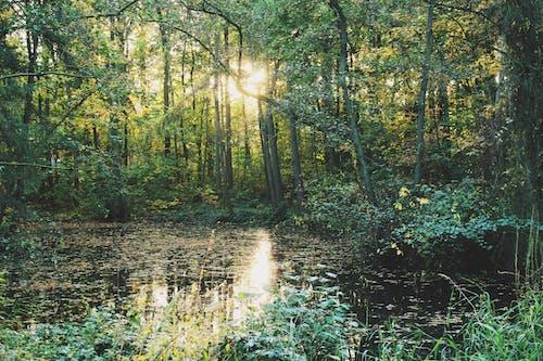 Ilmainen kuvapankkikuva tunnisteilla auringonvalo, ilta-aurinko, kasvu, luonnollinen