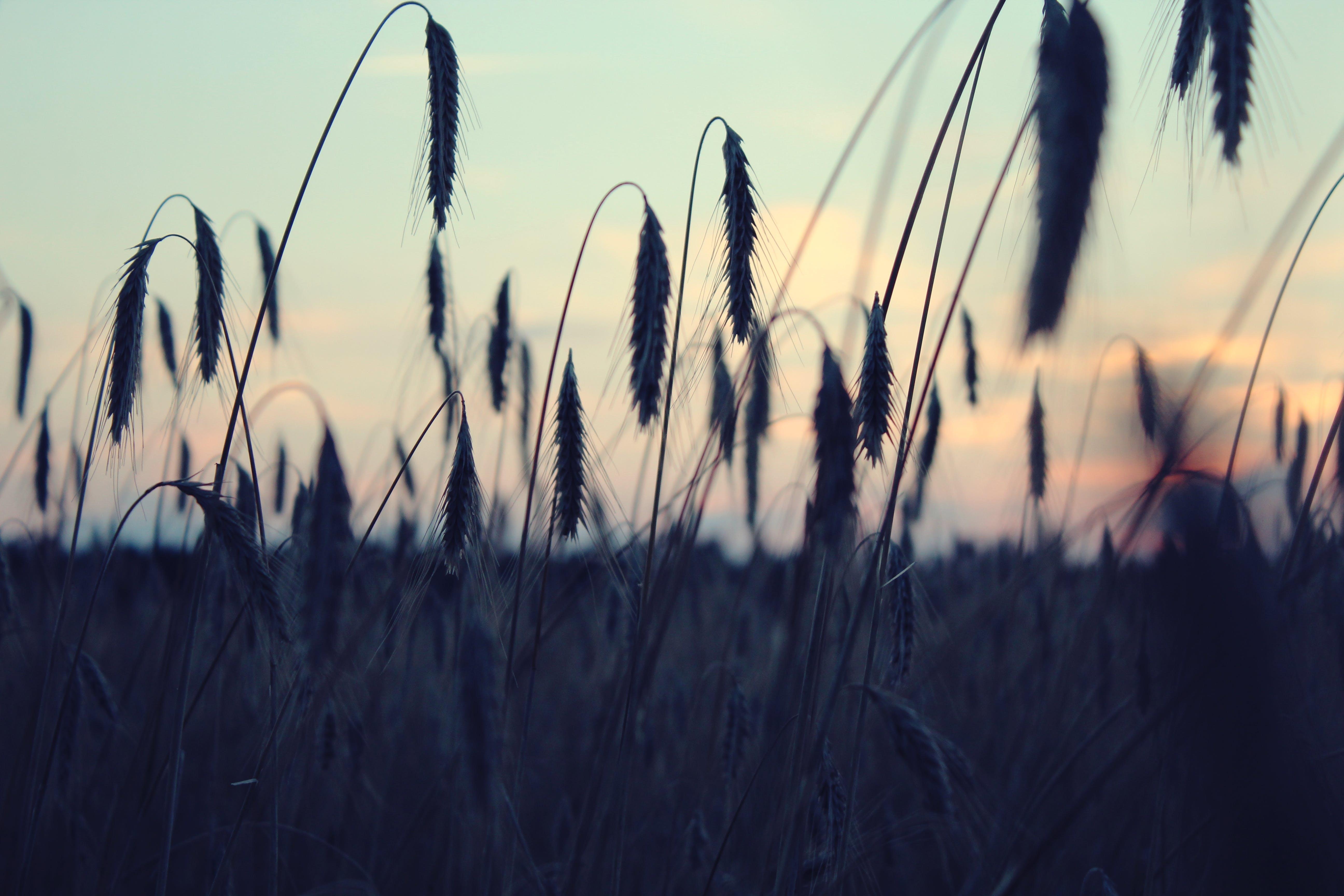 Kostenloses Stock Foto zu abend, abendhimmel, feld, natur