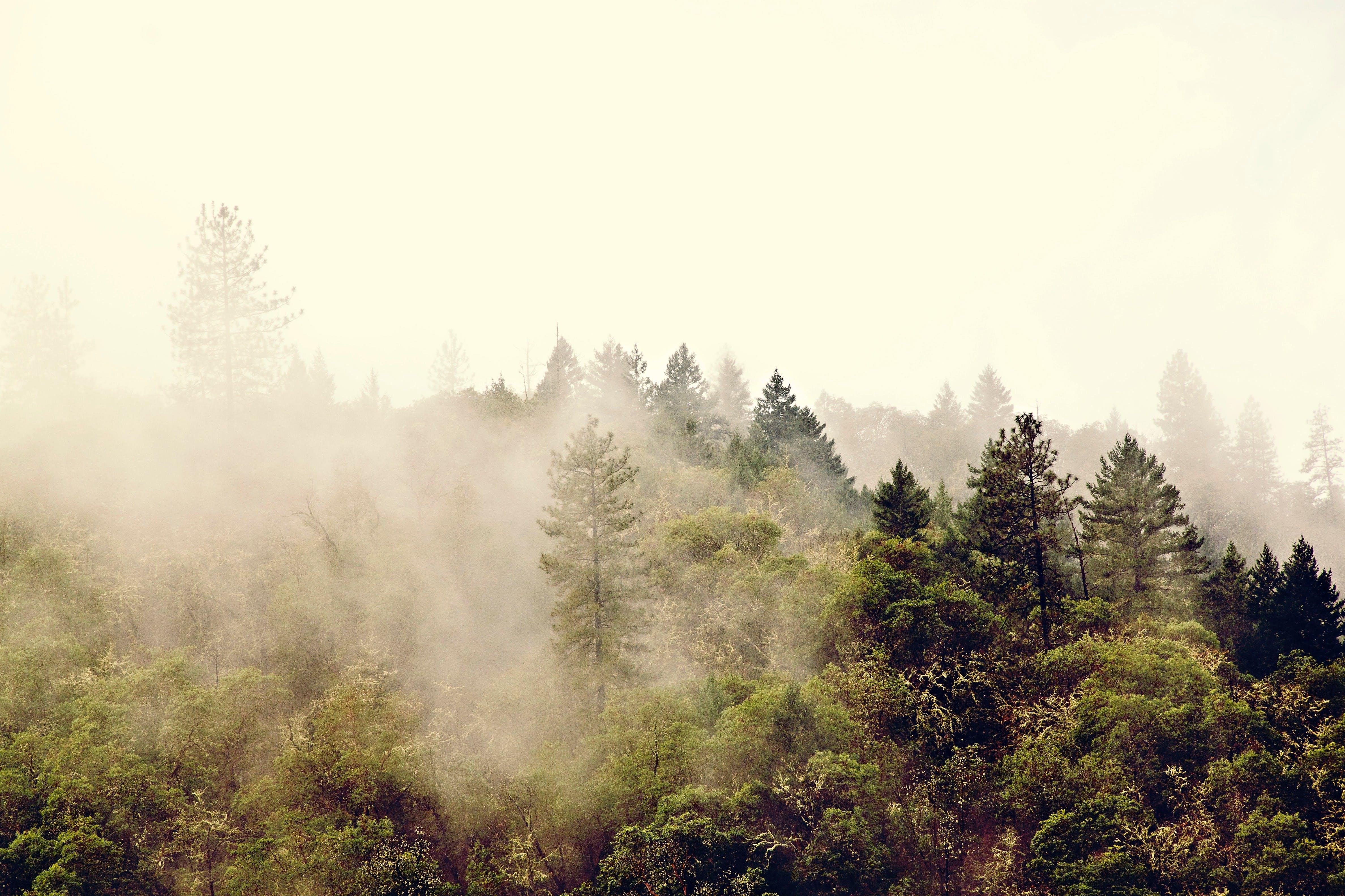Kostenloses Stock Foto zu aktiengläubigkeit, baum, bäume, berg