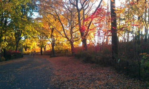 Free stock photo of central park, colors of autumn, fallen leaves