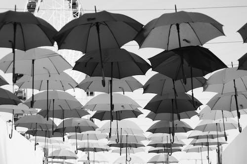 우산의 무료 스톡 사진