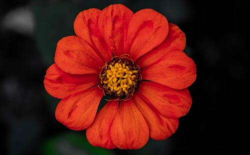 Gratis stockfoto met fabrieken, moeder natuur, mooie bloemen