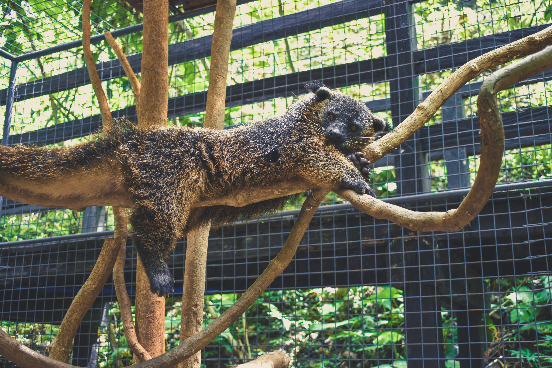 Animal on Tree Brunch
