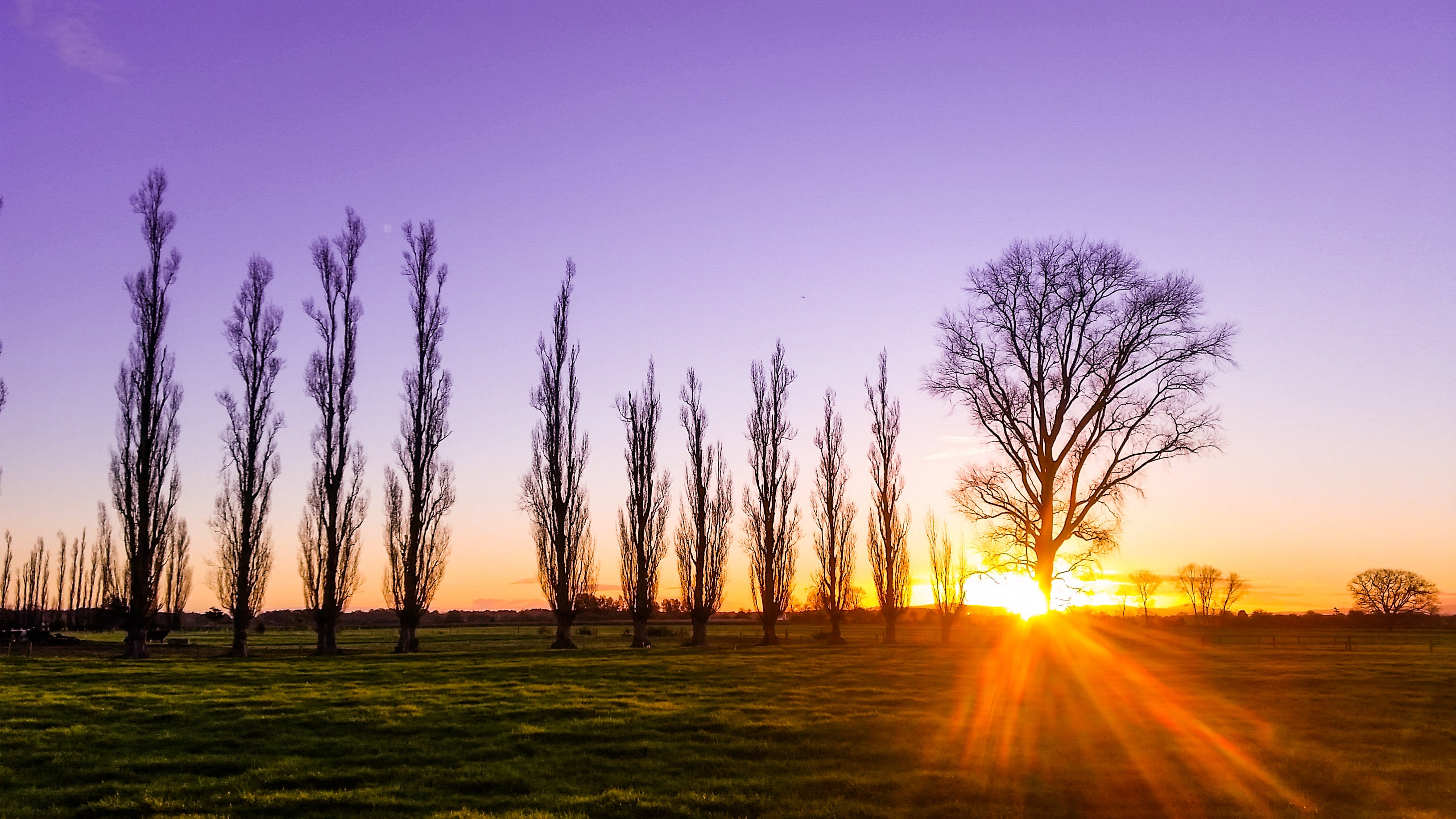 Free stock photo of sunset, field, sun, trees