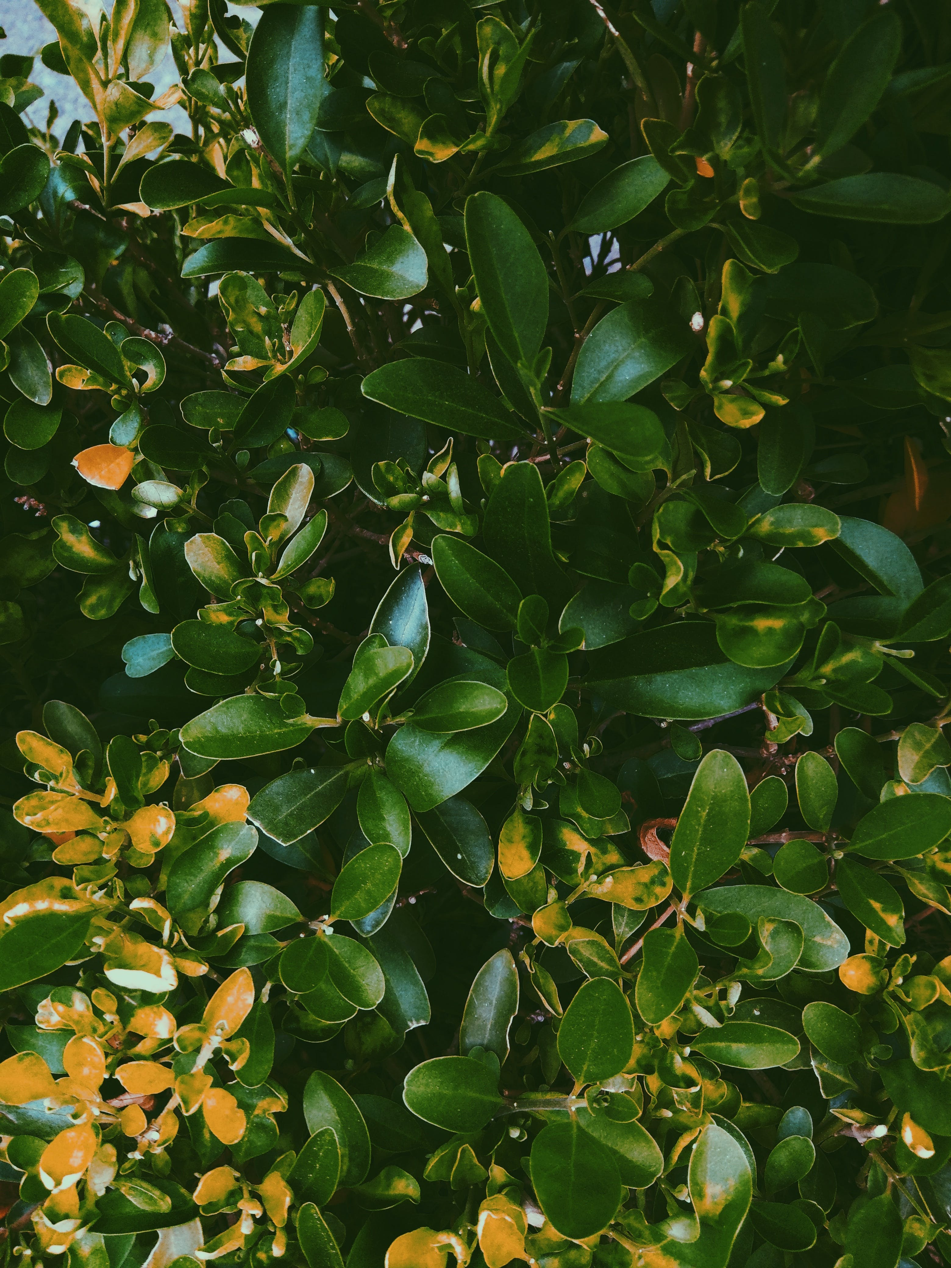 Green-and-orange Leaves