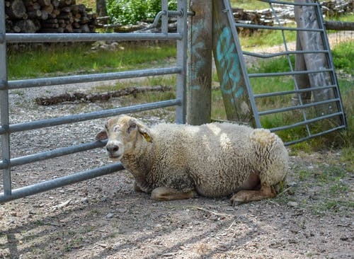 Free stock photo of animal, animal farming, mother nature, nature