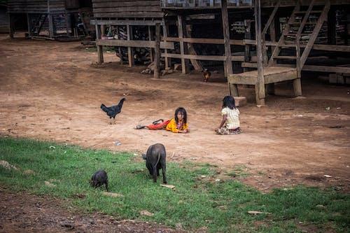 Základová fotografie zdarma na téma asijské holky, denní světlo, děti, hospodářská zvířata