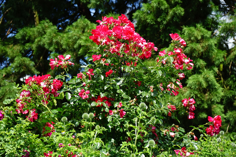 ağaçlar, Bahçe, bitki örtüsü, bitkibilim içeren Ücretsiz stok fotoğraf