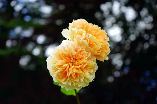 1000 beautiful yellow flowers photos pexels free stock photos free stock photo of landscape nature flowers garden mightylinksfo