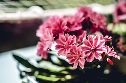 Ingyenes stockfotó botanikus, csokor, fényes, kert témában