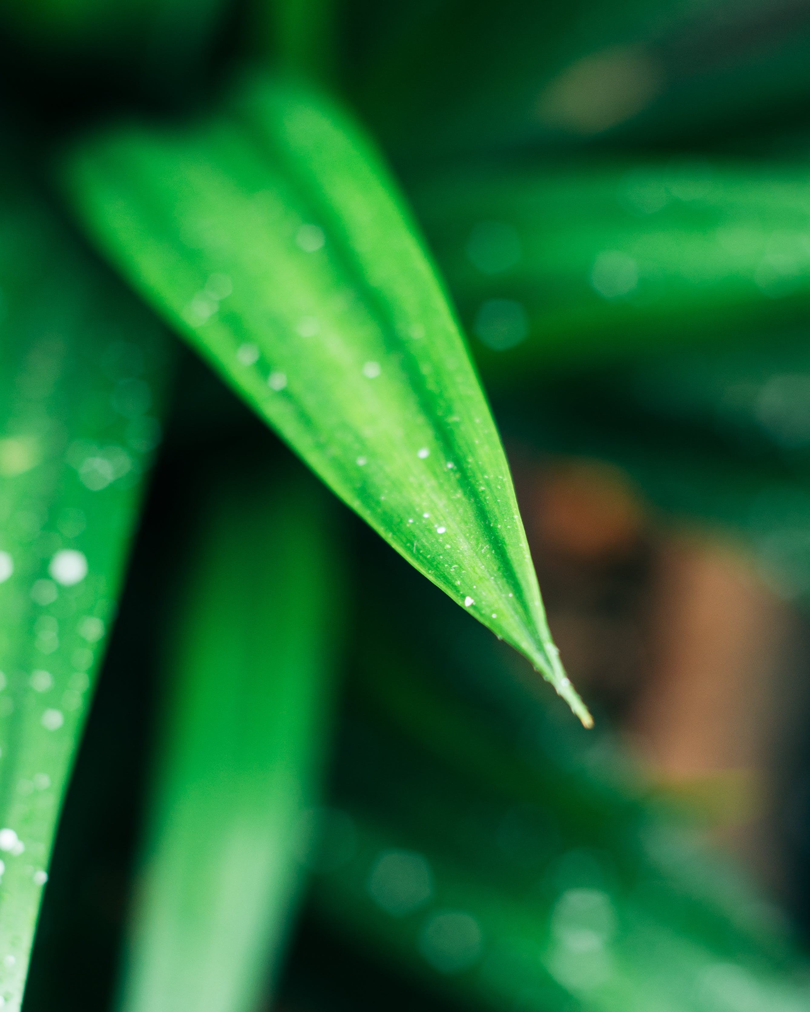 Closeup Photography of Green Leafed Plant With Water Dew