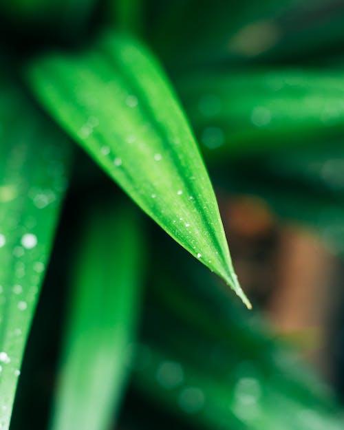 Безкоштовне стокове фото на тему «великий план, волога, завод, зелений»