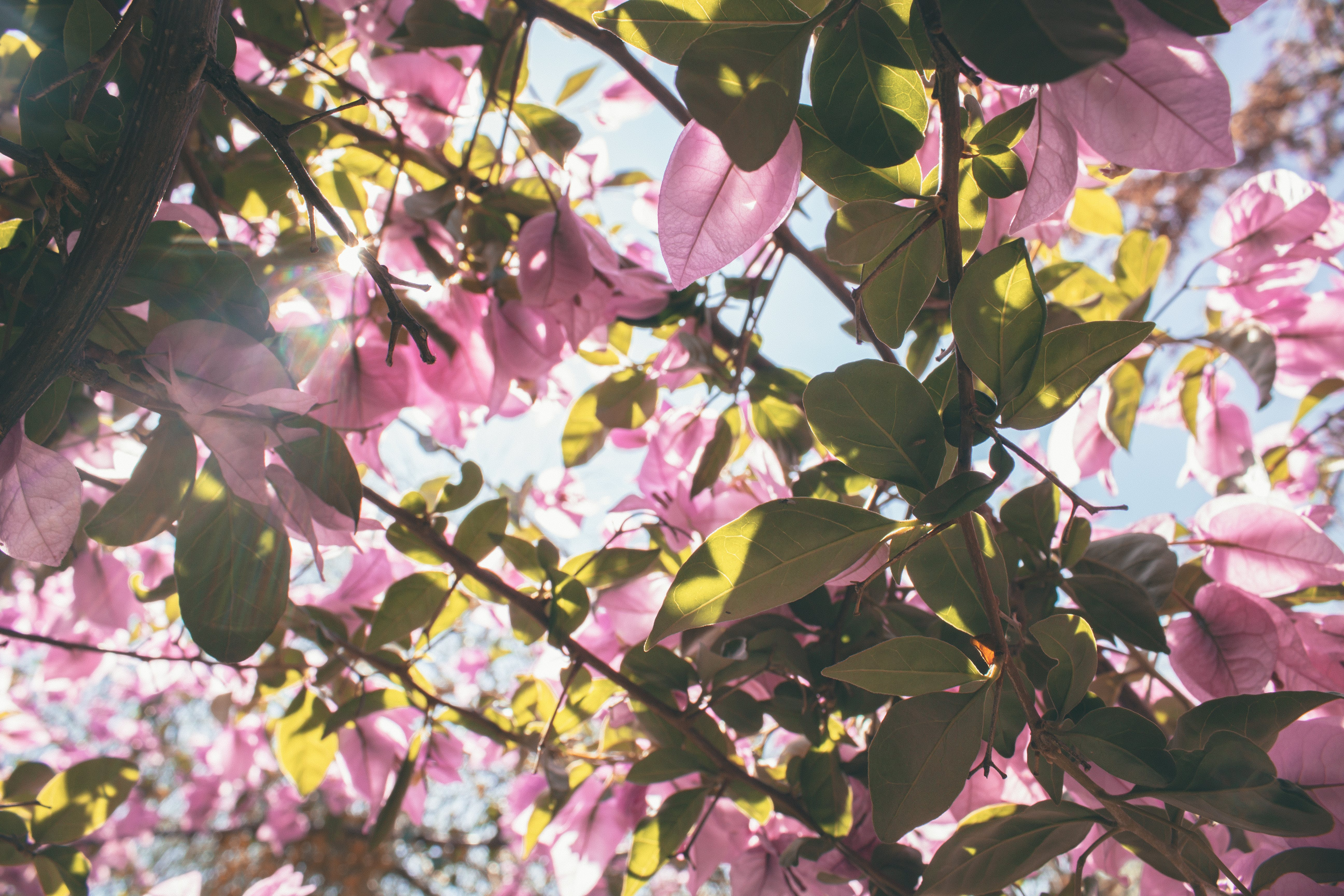 Low-angle Photography of Pink Petaled Flowers at Daytime