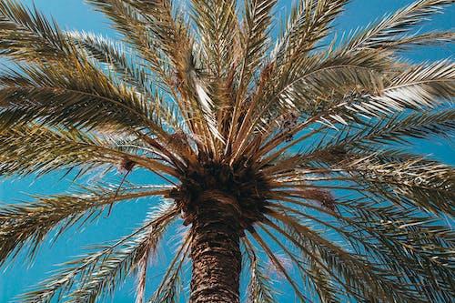 Imagine de stoc gratuită din arbore, cer albastru, culoare, fotografie cu unghi mic
