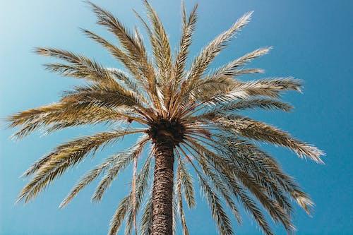 Ảnh lưu trữ miễn phí về ánh sáng ban ngày, bầu trời, cây dừa, lòng bàn tay