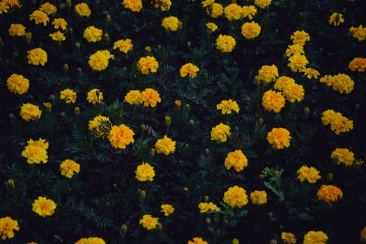 1000 beautiful yellow flowers photos pexels free stock photos photo of fully bloomed yellow petaled flower plants mightylinksfo