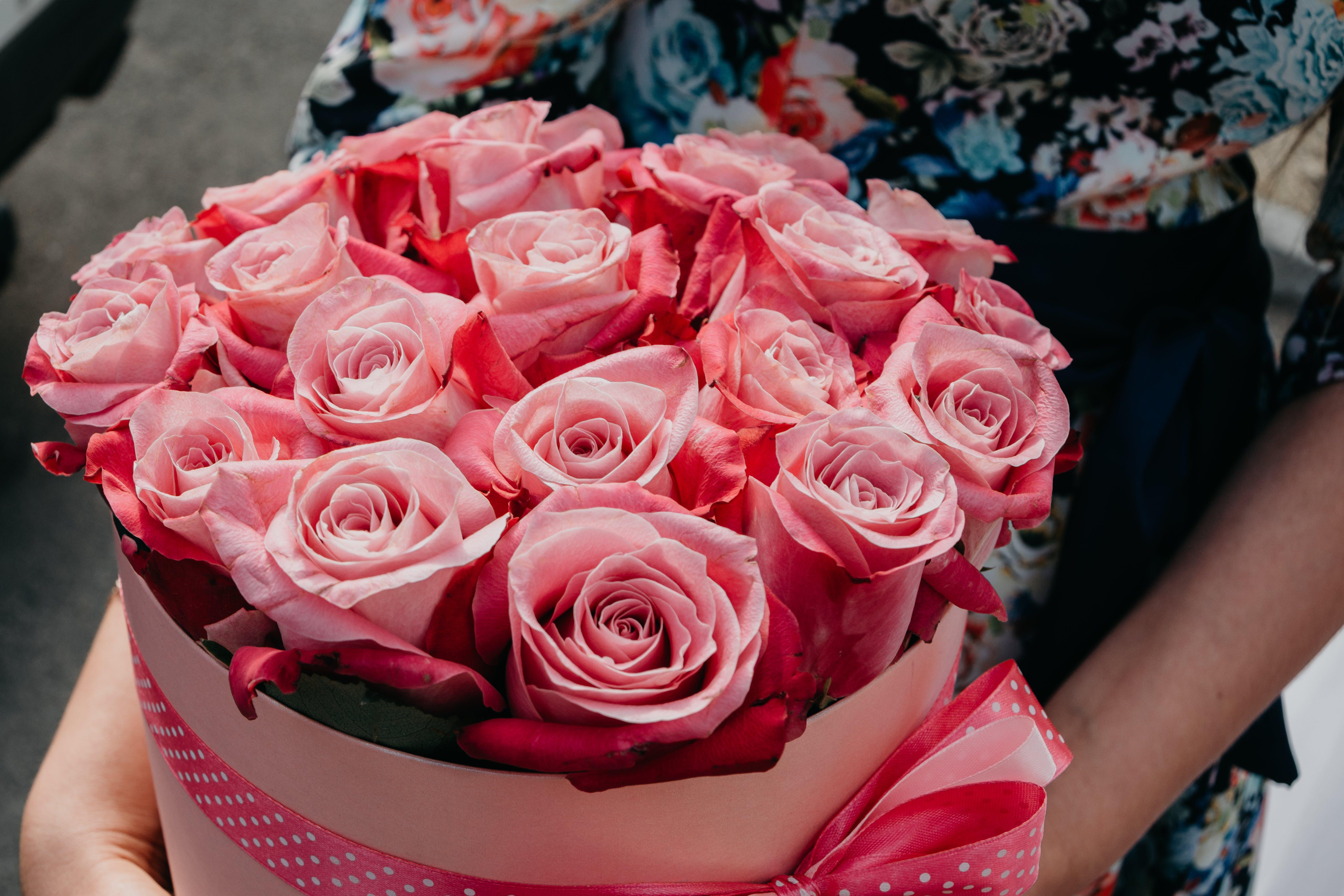 Δωρεάν στοκ φωτογραφιών με αγάπη, ανθίζω, άνθος, γιορτή