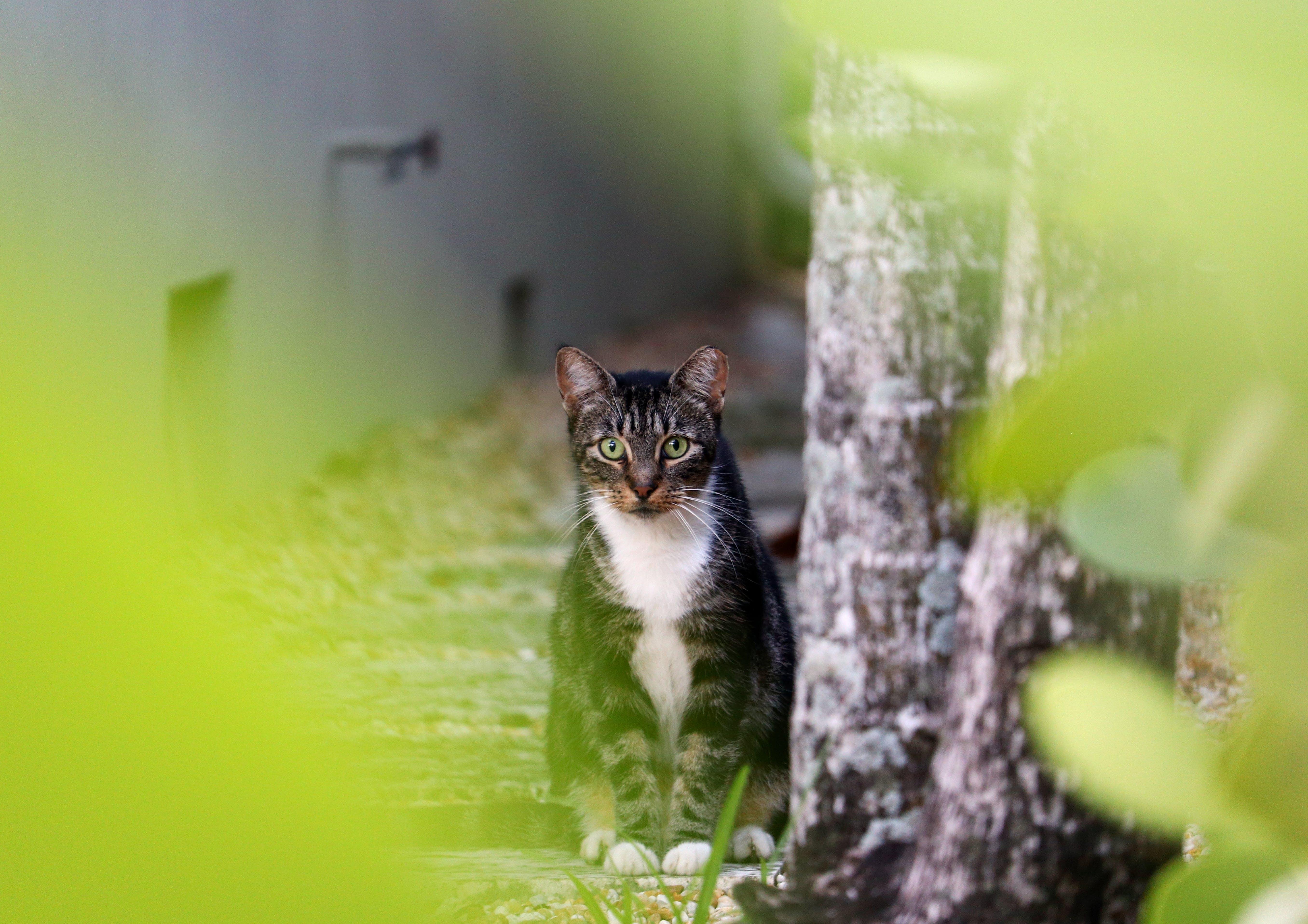 Gratis lagerfoto af dyr, have, hjemlig, kat