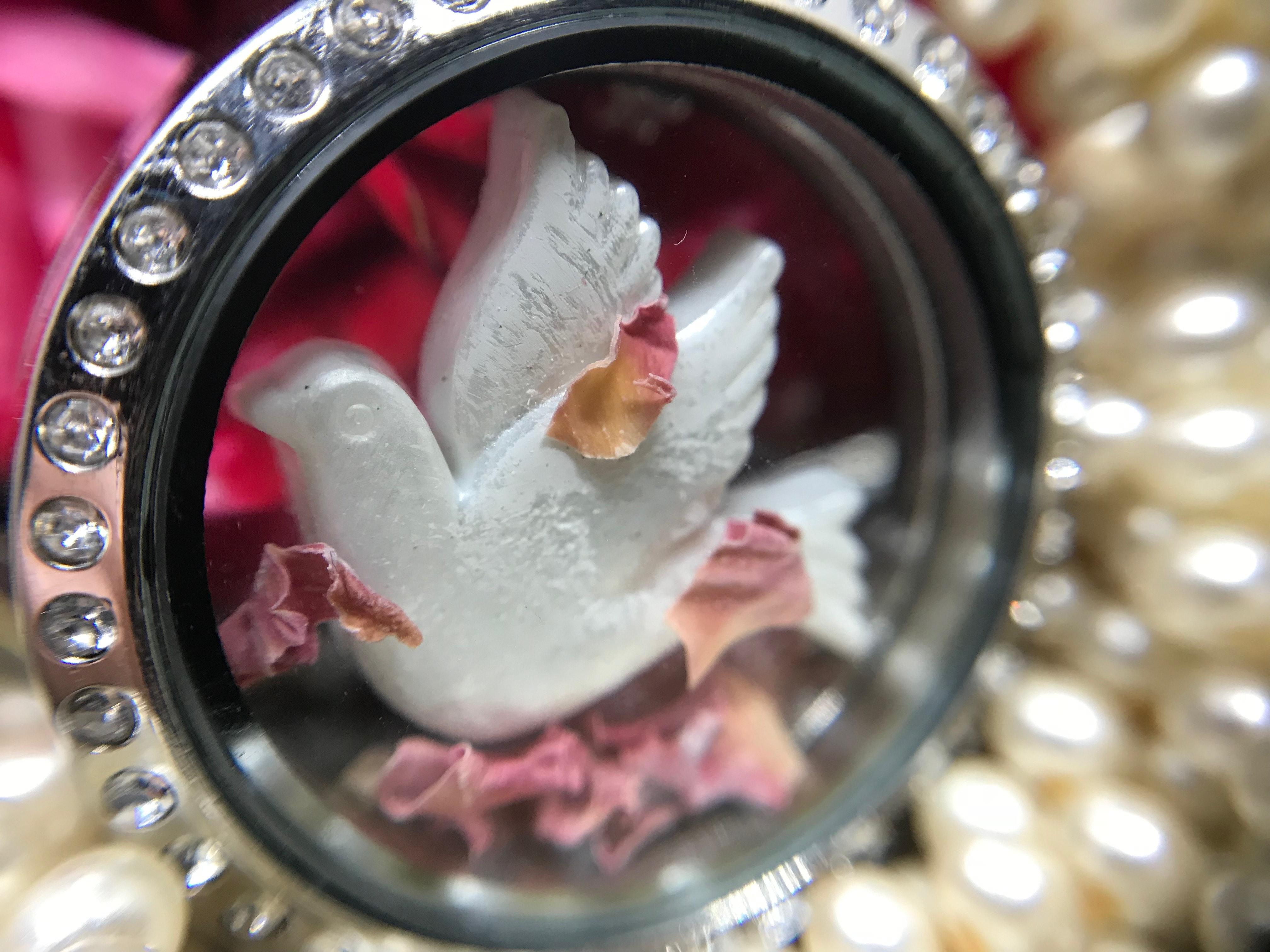 Free stock photo of dove, holy, holy spirit