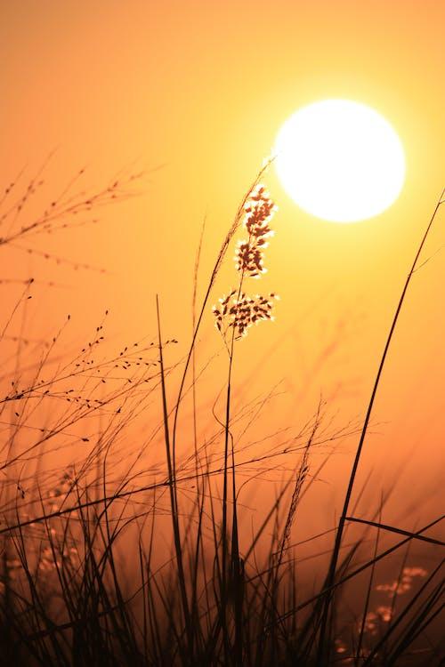 Kostnadsfri bild av gyllene sol, gyllene timmen, soluppgång